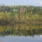 Baumspiegelungen im See. Herbstimpression See Und Wald ©Foto: Tarja Prüss | Tarjas Blog - Reiseblog Finnland