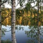 Herbststimmung - Birken und spiegelnde Bäume am See ©Foto: Tarja Prüss | Tarjas Blog - Alles über Finnland