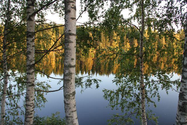 Wald und Wasser - Herbststimmung - Birken und spiegelnde Bäume am See ©Foto: Tarja Prüss   Tarjas Blog - Alles über Finnland