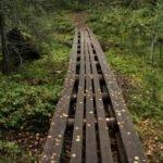 Holzbohlen Weg im Wald in Finnland ©Foto: Tarja Prüss | Tarjas Blog