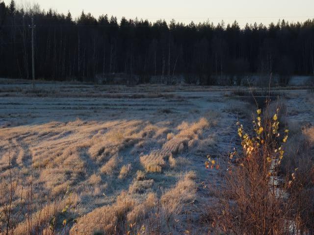 Vorboten des Winters: Frost in Haukipudas- gefrorene Gräser ©Foto: Tarja Prüss | Tarjas Blog - Alles über Finnland