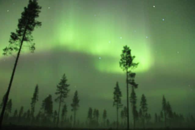Polarlichter mit Bäumen. Northern lights. Aurora Borealis. Finnland ©tarja prüss | Tarjas Blog - Reiseblog Finnland