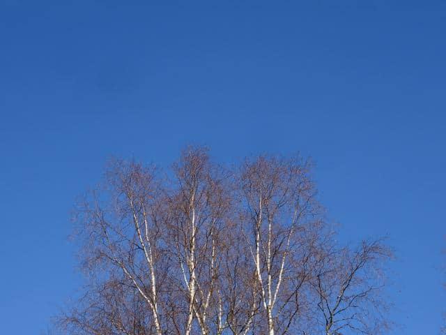 Blauer Himmel über den Baumkronen in Finnland. ©Foto: Tarjas Blog - Alles über Finnland DSC02591