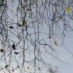 Herbstzweige mit Tropfen und wenigen Blättern ©Tarja Prüss