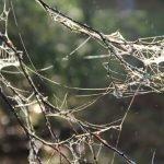 Morgentau sichtbar an Zweigen. Durch den Frost entstehen bizarre Formen. Aufgenommen mit Canon 7D in Haukipudas Finnland ©Tarja Prüss | Tarjas Blog - Reiseblog Finnland