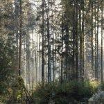 MOrgenblick in den Wald Haukipudas Finnland ©Tarja Prüss