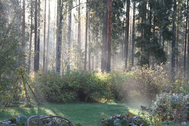 Morgendunst im Wald. Finnland ©Tarja Prüss