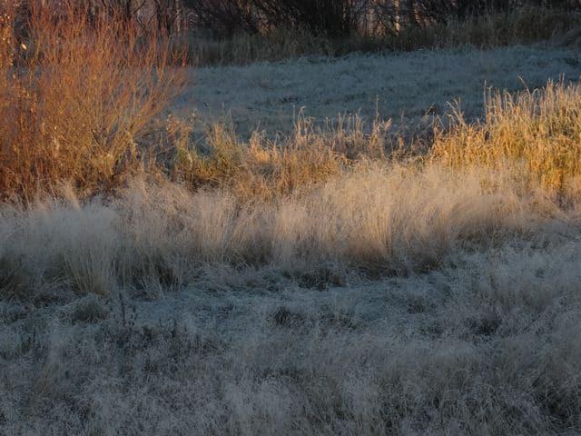 Vorboten des Winters: Frost in Haukipudas- gefrorene Gräser ©Foto: Tarja Prüss   Tarjas Blog - Alles über Finnland DSC02650