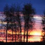 Farbenspiele: Bäume vor glutrotem Himmel in Oulu Finnland ©Foto: Tarja Prüss | Tarjas Blog - Alles über Finnland