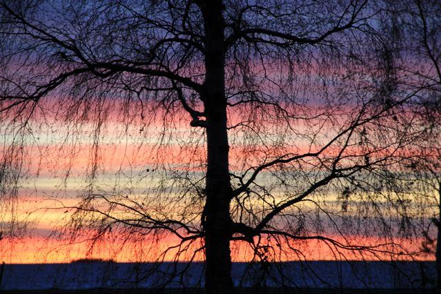 Blätterloser Baum vor rotem Sonnenuntergangshimmel ©Foto: Tarja Prüss | Tarjas Blog - Alles über Finnland