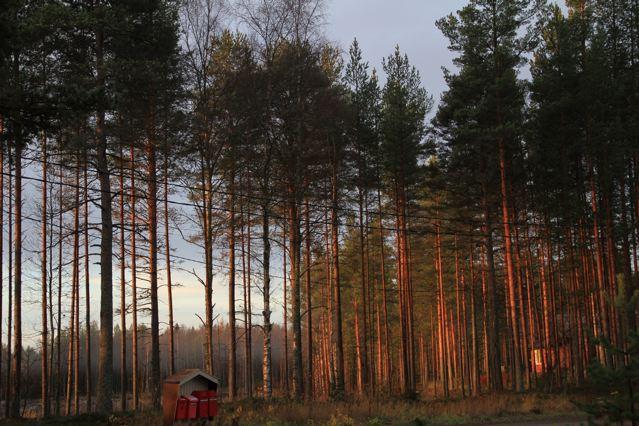 Finnland Reisen: Ankommen im Land (Copyright: tarja prüss)