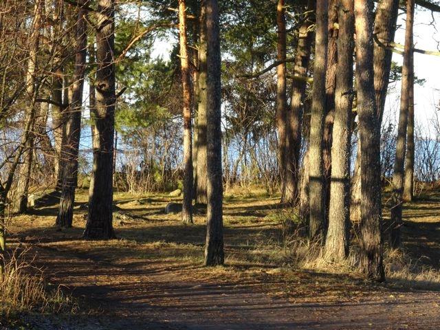 Besonderes Morgenlicht, das in einen Wald hinein scheint. ©Foto: Tarja Prüss | Tarjas Blog - Alles über Finnland