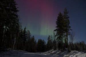 polarlicht mit wald