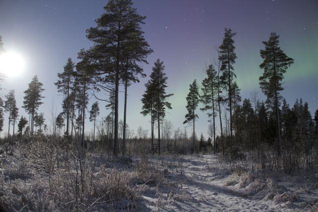 Polarlichter in Oulu - Finnland (copyright: tarja prüss)