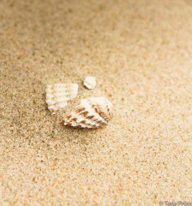 Strandgut - Muschel im Sand © Tarja Prüss | Tarjas Blog - Alles über Finnland