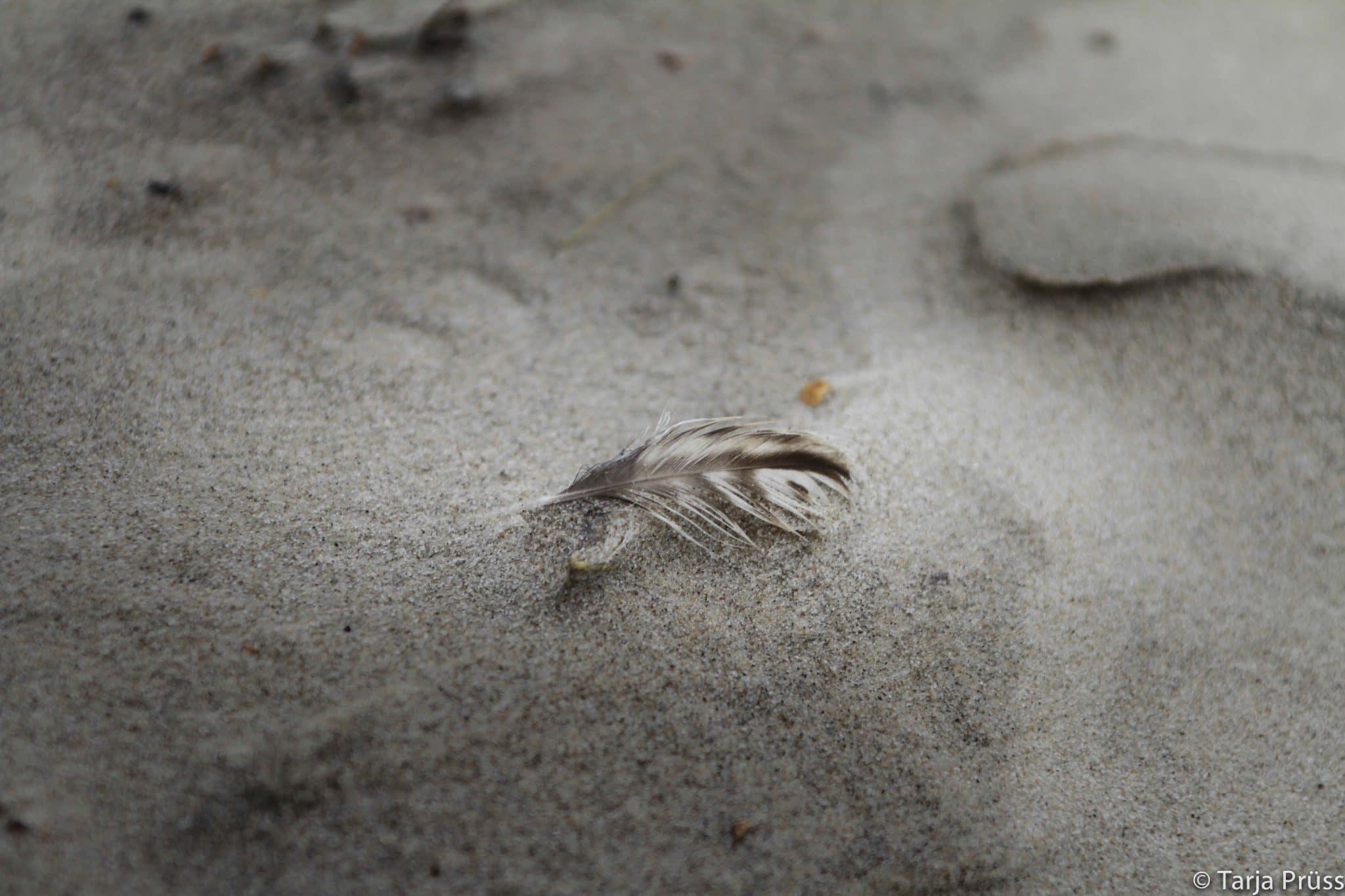 Strandgut - Feder im Sand ©Strandgut - Muschel im Sand © Tarja Prüss | Tarjas Blog - Alles über Finnland