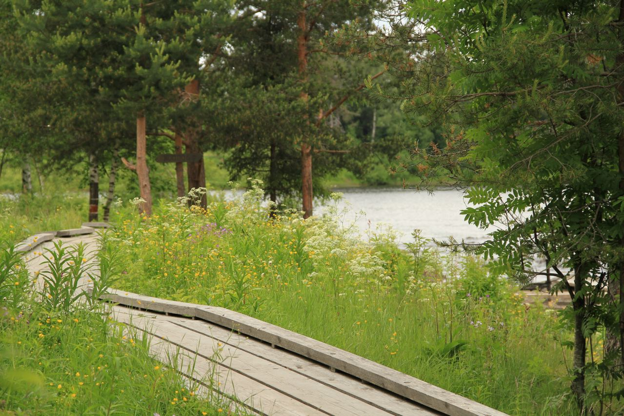 Koitelinkosket (Foto: Tarja Prüss)
