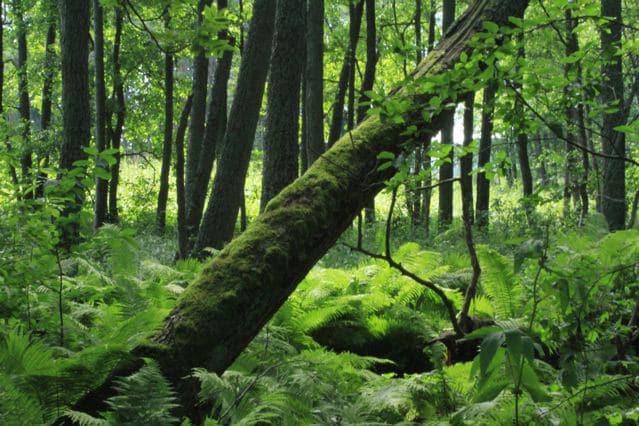 Wald mit halb umgefallenen Baum. Aufgenommen auf der Insel Vartiosaari bei Helsinki Finnland ©Foto: Tarja Prüss | Tarjas Blog - Alles über Finnland