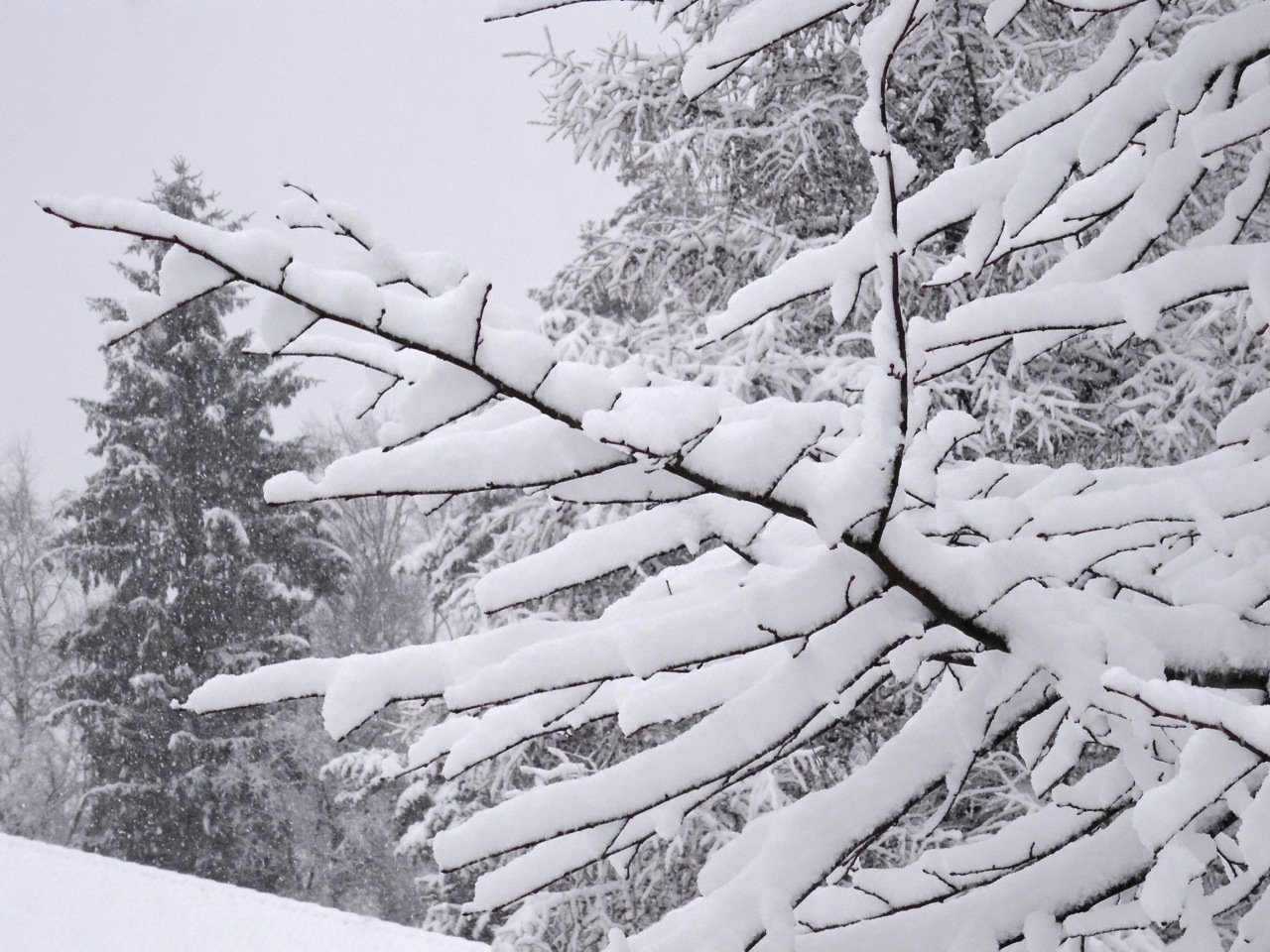 Winter in Lahti - 2015 © Tarja Prüss