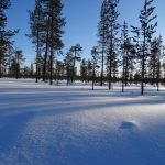 Verschneite Landschaft in Lappland ©Foto: Tarja Prüss   Tarjas Blog - Alles über Finnland