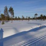 Langlauf in Lappland © Tarja Prüss