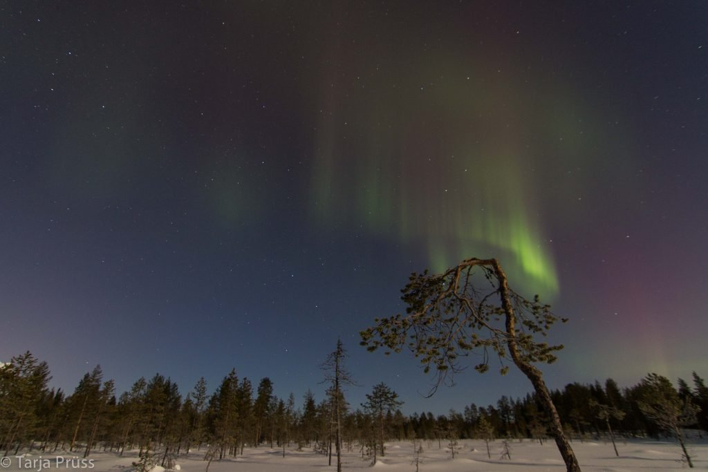 Polarlichter © Tarja Prüss