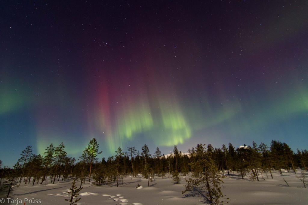 Polarlichter in Finnland © Tarja Prüss | Tarjas Blog - Alles über Finnland