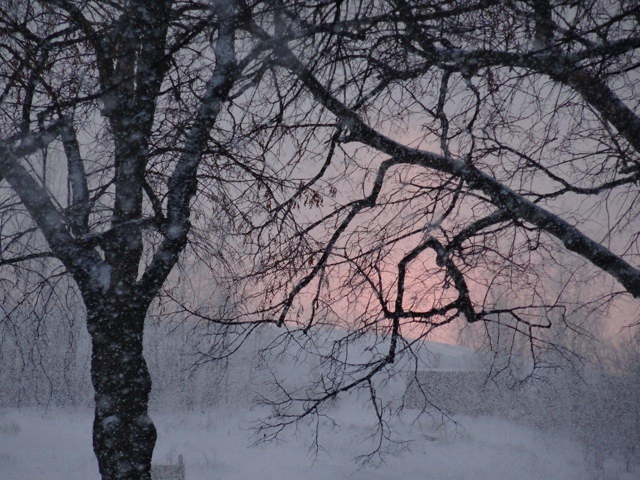 Winter in Helsinki - Baum vor rosa Himmel und leichter Schneefall ©Tarja Prüss   Reiseblog Finnland