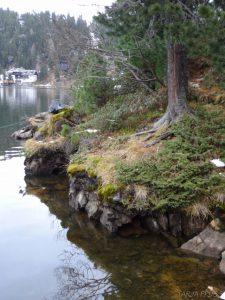 Turracher Höhe. Turracher See Ufer. Österreich ©Tarja Prüss   Tarjas Blog - Reiseblog Finnland