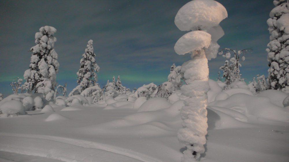 Polarlichter mit Schnee in Hetta Finnland, Winter
