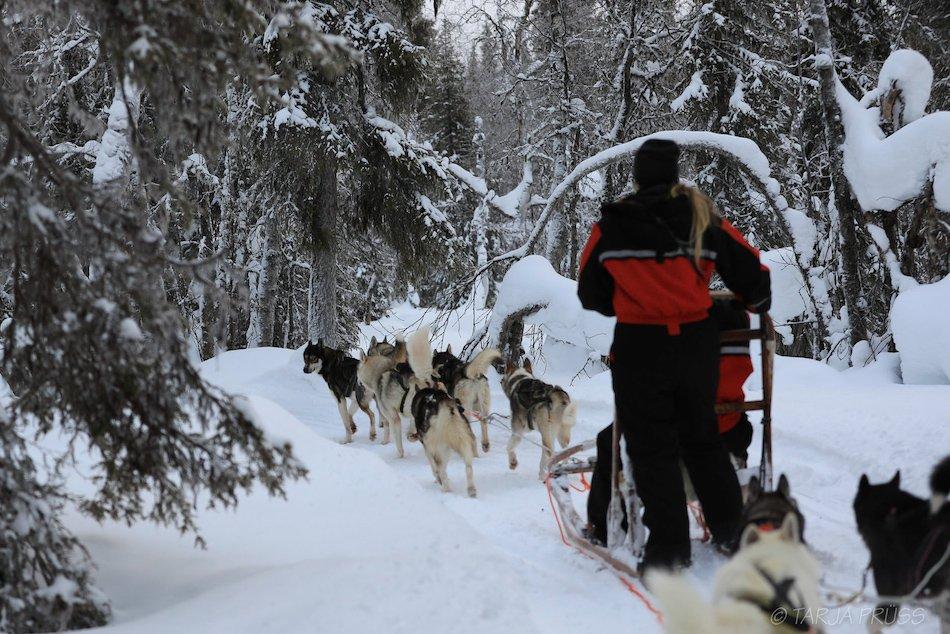 Huskytouren in Ylläs ©Foto: Tarja Prüss