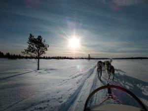 Urlaub in Lappland: Huskyschlittenausfahrt in Lappland, Finnland © Foto: Tarja Prüss