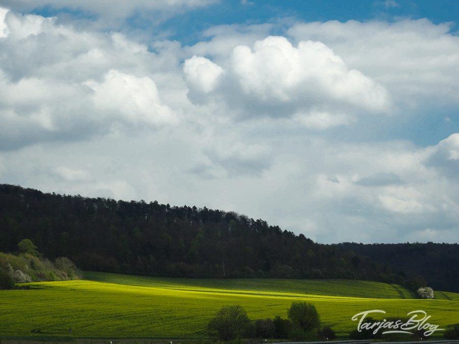 Rapsfeld Norddeutschland. Foto: Tarja Prüss