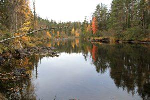 bunt gefärbte Blätter - Herbst in Finnland © Foto: tarja prüss   tarjasblog - reiseblog finnland