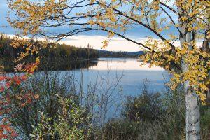 Herbst in Lappland mit Birke im Vordergrund ©Foto: tarja prüss   tarjasblog
