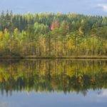 Baumspiegelung -Lappland ©Foto: tarja prüss | tarjasblog