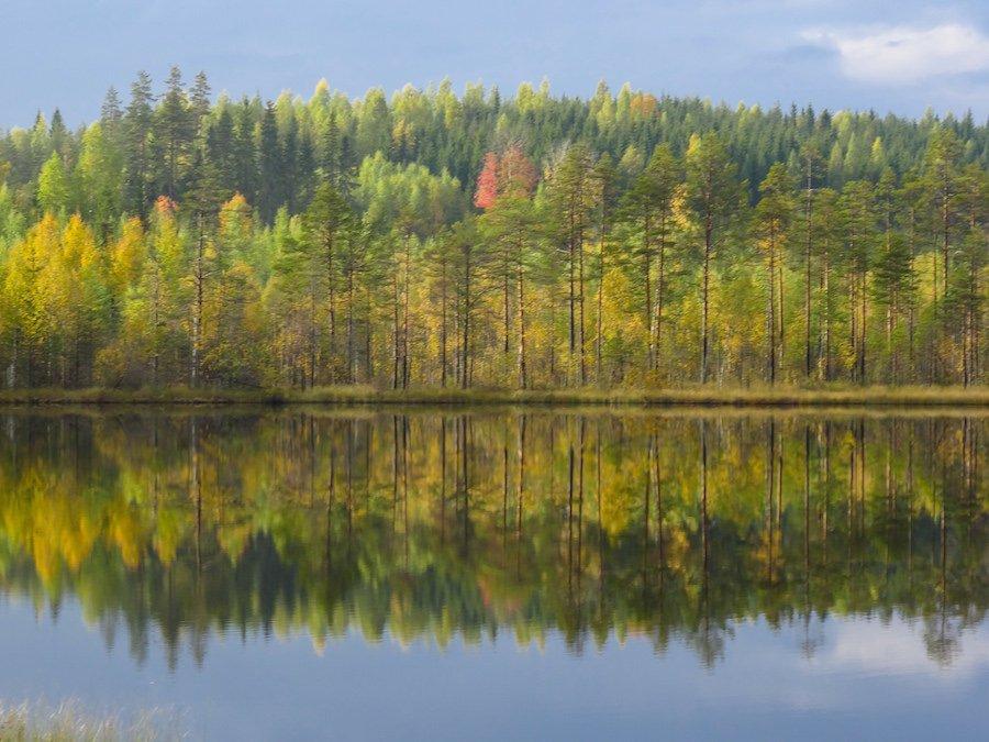 Baumspiegelung -Lappland ©Foto: tarja prüss   tarjasblog