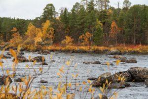Wald und Fluss in Lappland im Herbst ©Foto: Tarja Prüss   Tarjas Blog