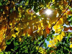 Sonne scheint durch Herbstblätter ©Foto: tarja prüss   tarjas blog