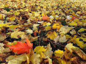 Herbstblätter ©Foto: tarja prüss | tarjas blog