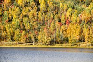 Ruska in Finnland: bunt gefärbte Wälder am See © Tarja Prüss