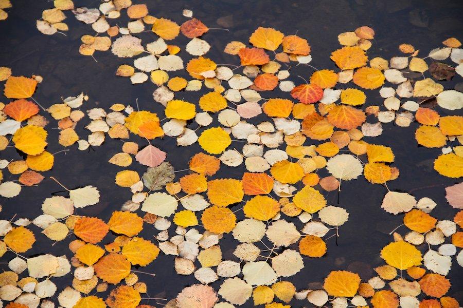 Herbst in Finnland ©Foto: Tarja Prüss | tarjasblog.de