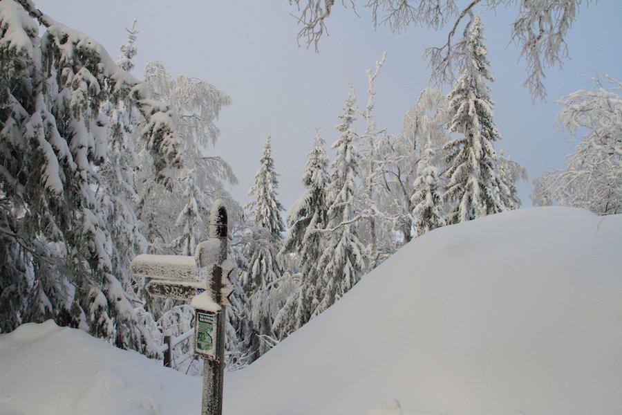 Winterlandschaft-koli-finnland©TarjaPruess
