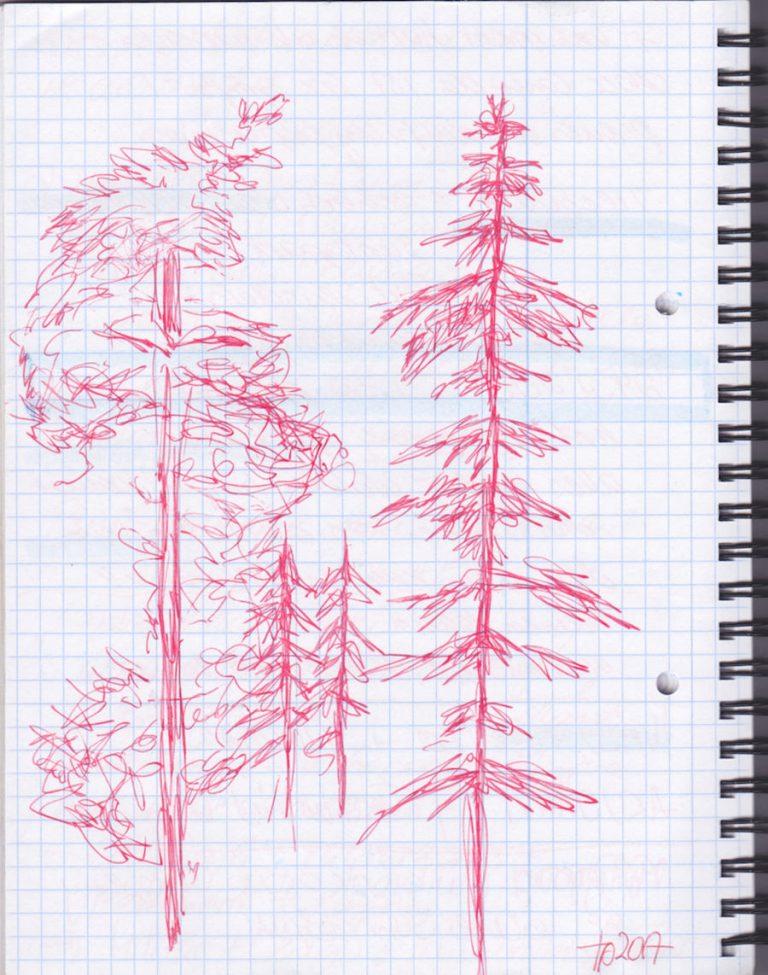 Skizze: Bäume ©Tarja Prüss | tarjasblog.de