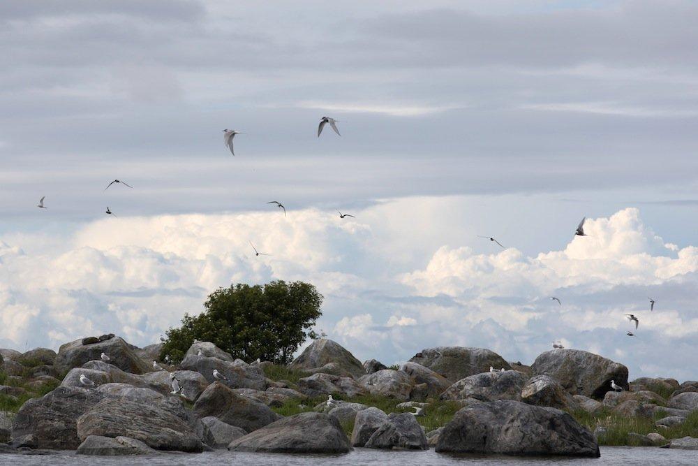 Suomi Countdown: Vögel im Kvarken Naturschutzgebiet, Finnland 2017 ©Foto: Tarja Prüss | tarjasblog.de