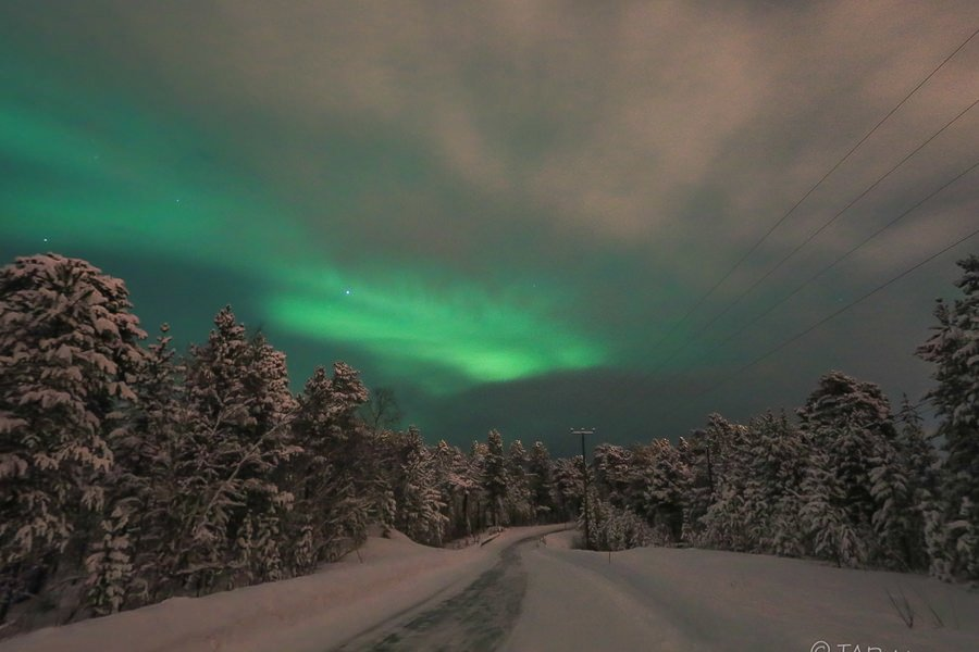 Wo sieht man Polarlichter in Lappland? Hier in Inari. Über dem Wald ©Tarja Prüss   Tarjas Blog - Reiseblog Finnland