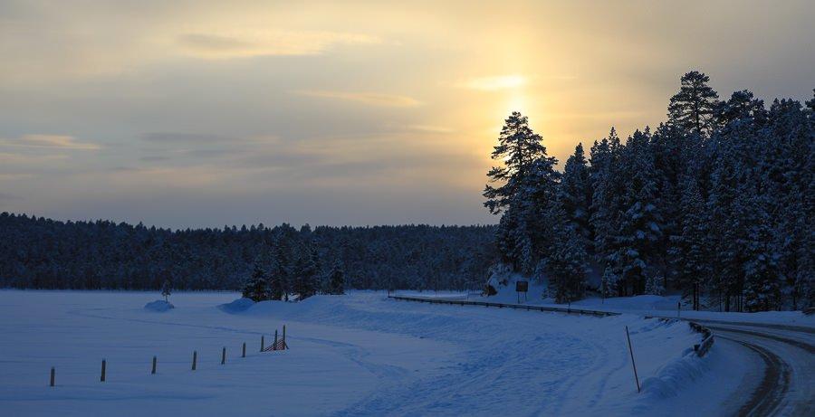 Sonnenuntergang in Lappland. Sonne verschwindet hinter eine großen Fichte. ©Tarja Prüss   Tarjas Blog -Reiseblog Finnland
