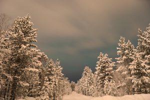 schneewald nachts hell©tpruess 1 mini
