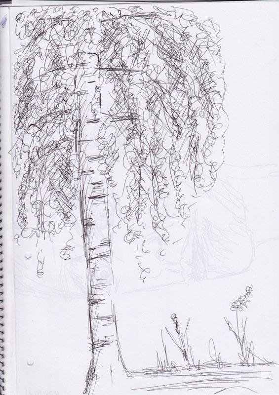 Skizze Birke Finnland. Schwarzer Filzstift auf Papier ©Tarja Prüss