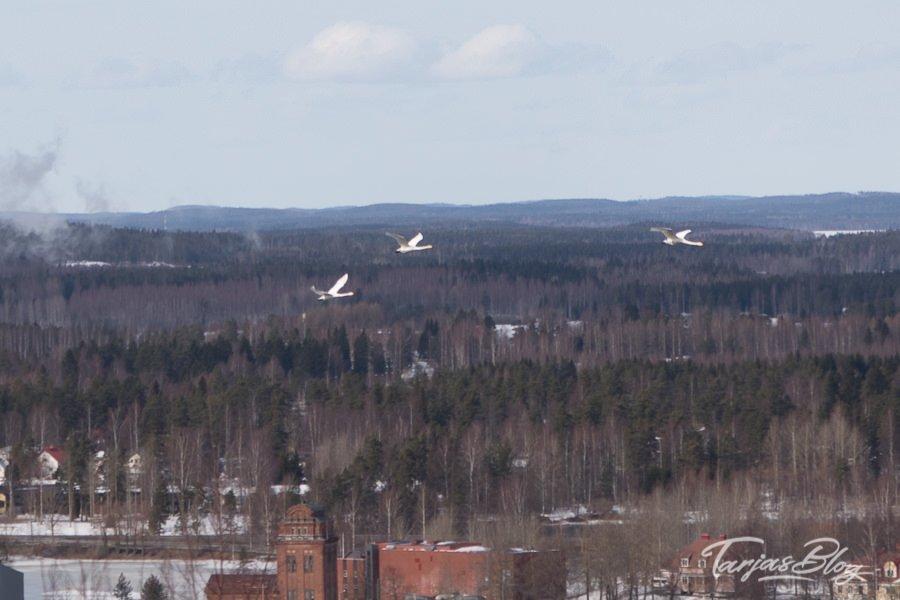 Blick von Mänttänvuori Aussichtsturm © Tarja Prüss | Tarjas Blog - Alles über Finnland